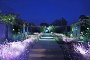 Garden1 night