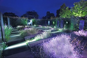 Garden2 night