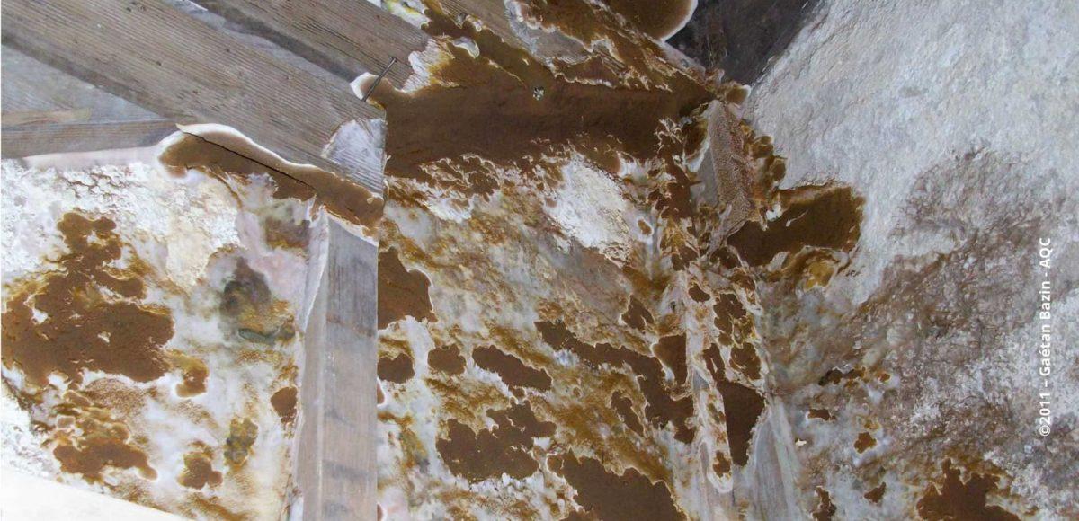 construction bois laqc publie une plaquette sur le risque mrule