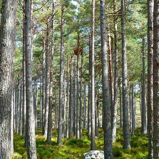 Contrat filière bois