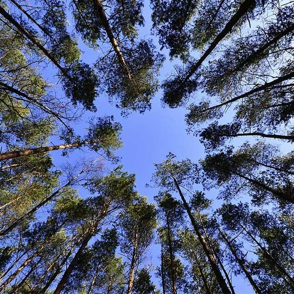Construction bois : fonds d'aide filière forêt-bois